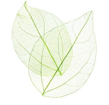 Hochsensibel symbolisiert durch zarte Blätter