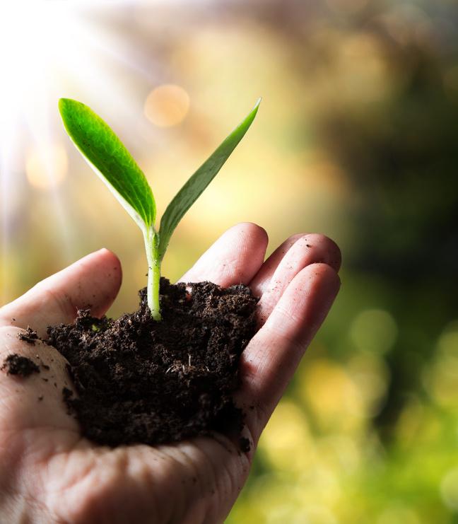 Hochsensibilität symbolisiert durch zarte Pflanze in Hand gehalten