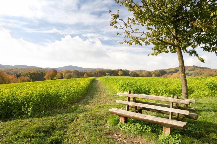 Lebensberatung bei sich selbst ankommen - Bank in der Natur