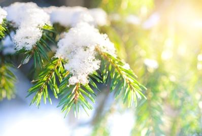 Neubeginn symbolisiert durch Neuschnee auf Zweig eines Nadelbaums