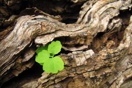 Gesund Sensibel Sein symbolisiert durch frische grüne Pflanze auf Holzstamm