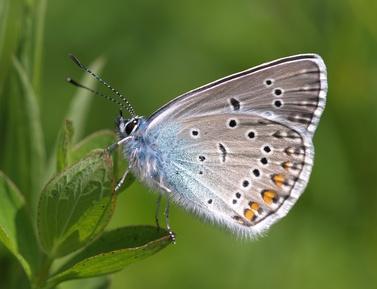 empfindlicher Schmetterling auf grüner Pflanze