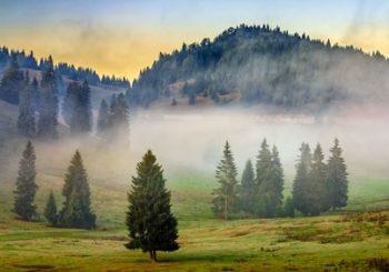 Bäume im Nebel - Raum der Ruhe