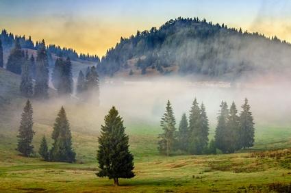 Innere Unruhe gespiegelt durch Bäume im Nebel
