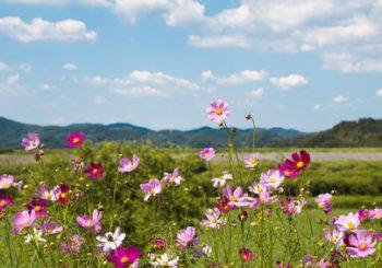 hochsensibel zeigt rosa Blumenwiese und zarter Himmel