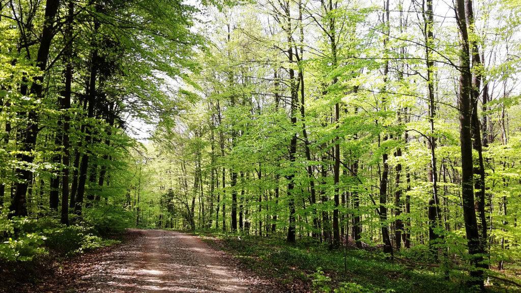 Waldweg im Naturcoaching mit Sonne und Schatten