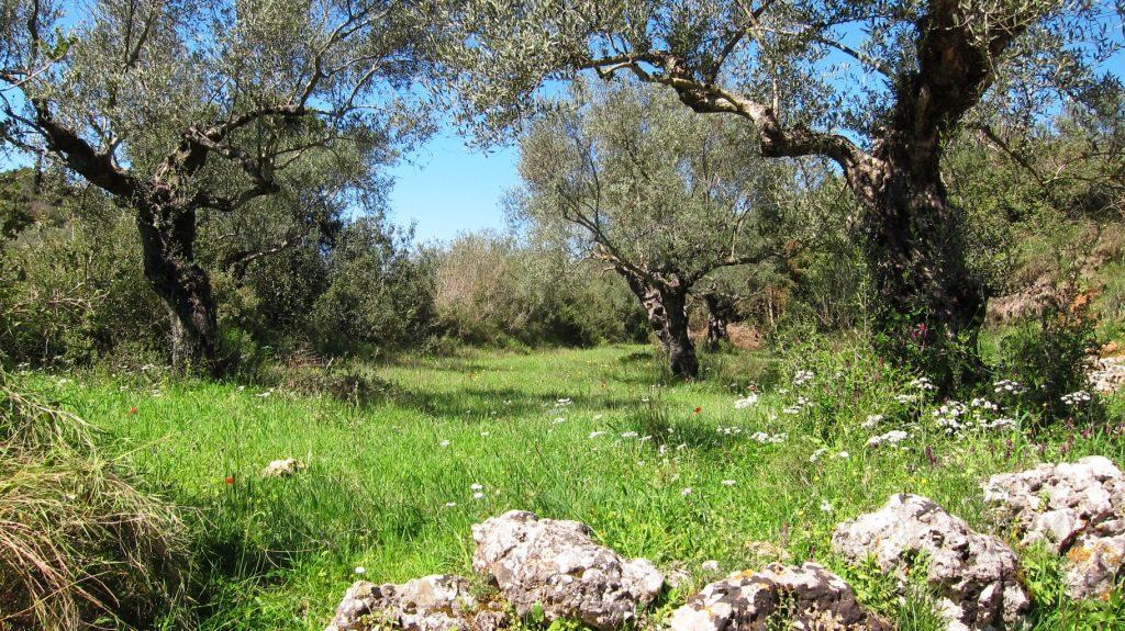 Olivenbaum und Wiese zum Stressabbau
