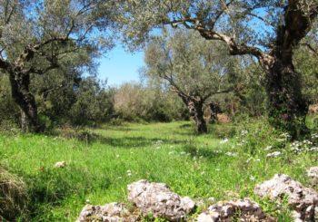 Olivenbaum und Wiese Stressabbau