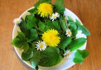 frische Blätter und Blüten