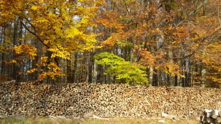 Herbststimmung hilft Körper und Psyche entspannen