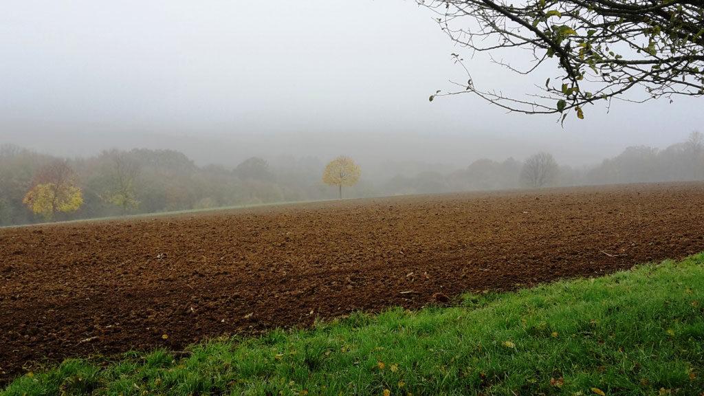 Feld mit Nebel als Vergänglichkeit