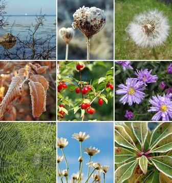 Herbstschätze helfen Lebensfreude wiederfinden