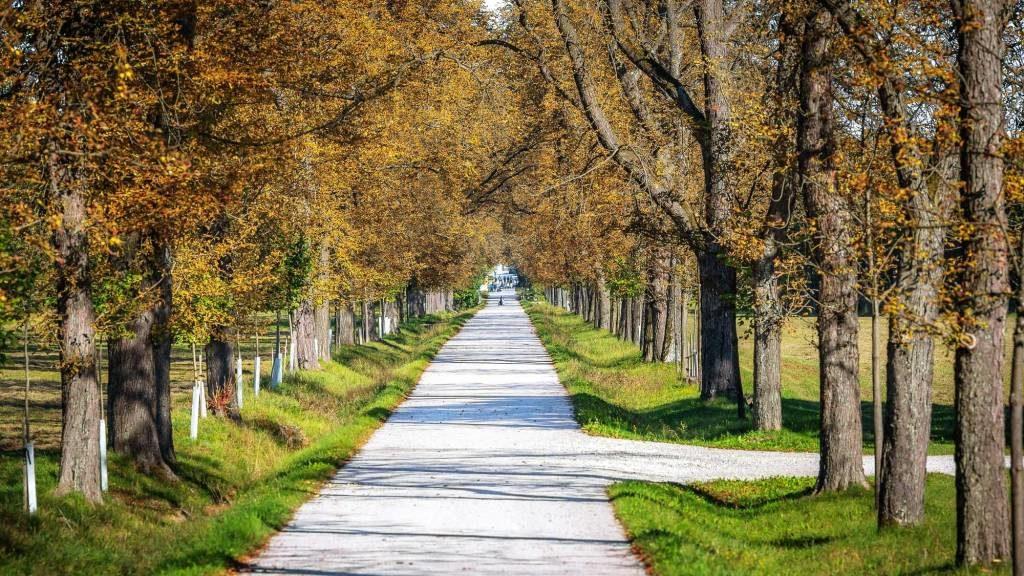Wie fühlt sich Hochsensibilität an - Baumallee im Herbst