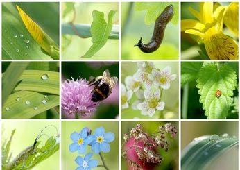 Collage Frühling zeigt Vielfalt Glaubenssätze