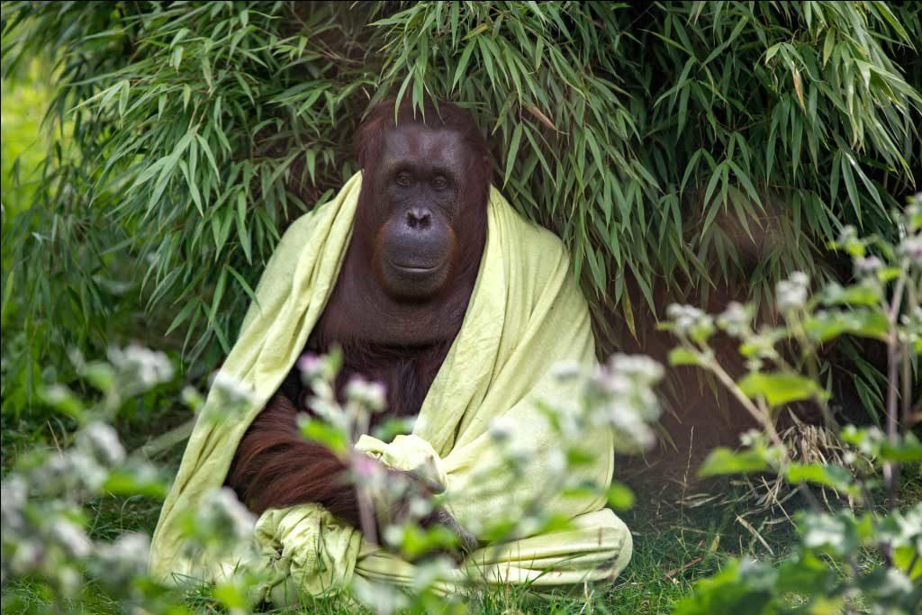 achtsamkeit symbolisiert durch affen in meditationspose mit umhang in natur