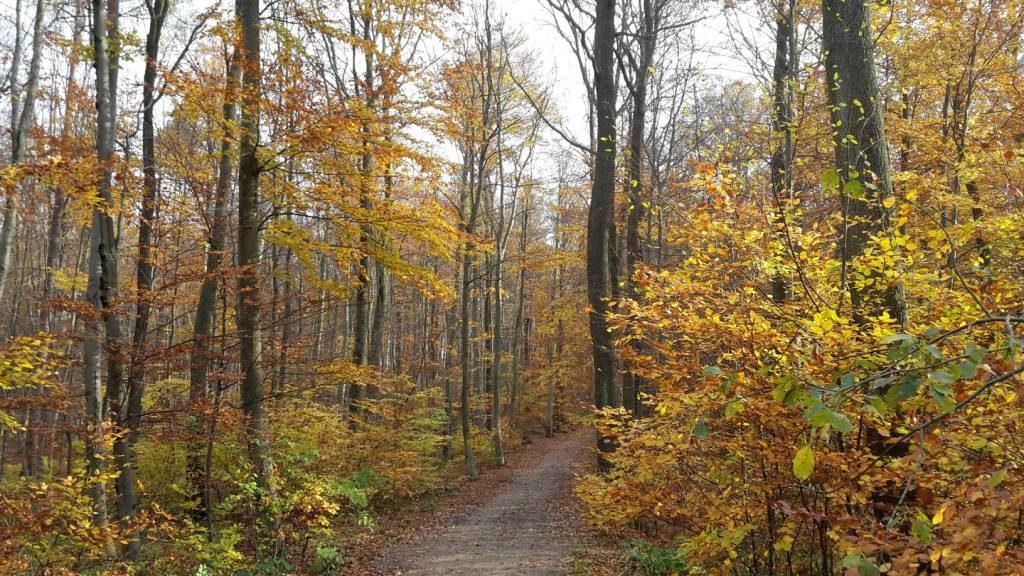 Herbstwaldweg symbolisiert Resilienztraining