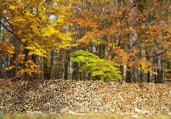 Herbstwald mit Holzstapel im Beitrag psychische Belastung
