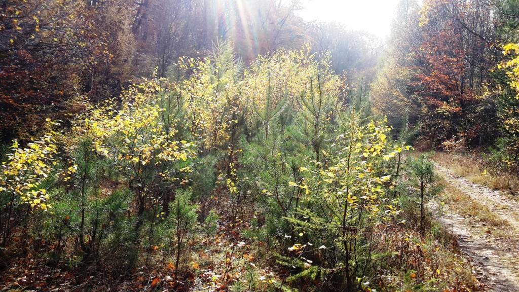 herbstlicher Wald hilft psychische Krise überwinden