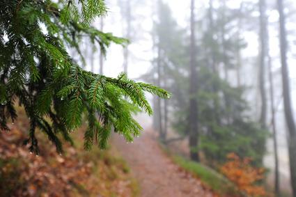 Stressbewältigung symbolisiert durch mystischen Waldweg mit leichtem Nebelt Felsen