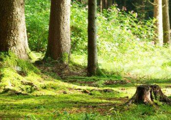 waldboden im frühling symbolisiert burnout prävention