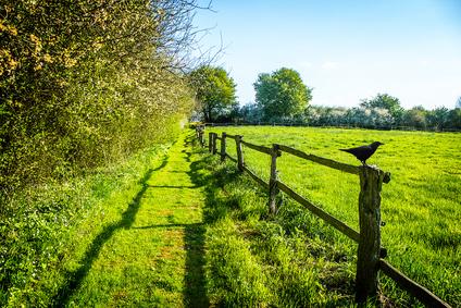 stress wird in der natur abgebaut, grüne wiese mit zaun