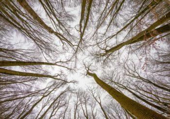 Selbstwirksamkeit als Blick zu Baumkronen im Winter